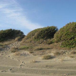 dune-sabaudia-22-500x375