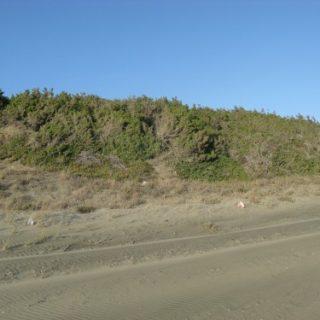 dune-sabaudia-3-500x375