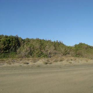 dune-sabaudia-4-500x375