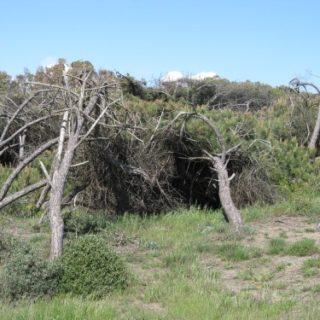 dune-sabaudia-58-500x375