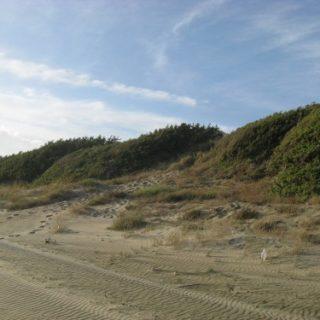 dune-sabaudia-6-500x375
