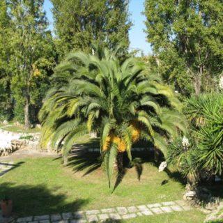 Cisterna-Agrit.-Green-Line12-500x375