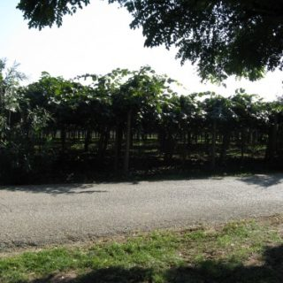 Cisterna-Agrit.-Green-Line15-500x375