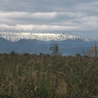 Monte San Biagio (9)