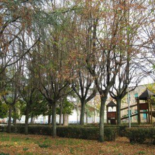 Sezze giardino 4