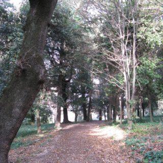 Sezze giardino 6