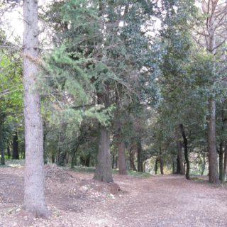 Sezze giardino 7